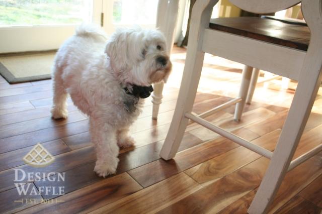 design waffle dog